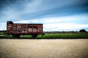 Auschwitz-Birkenau, le petit bois de bouleau