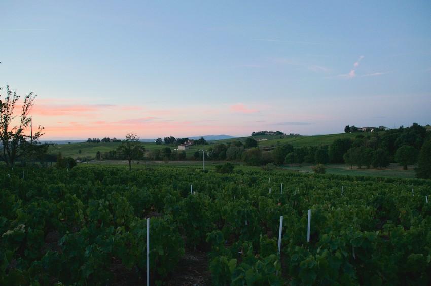 Réveil le matin dans les vignes du Beaujolais