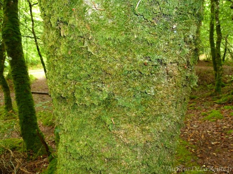 Epaisseur de mousse sur les tronc