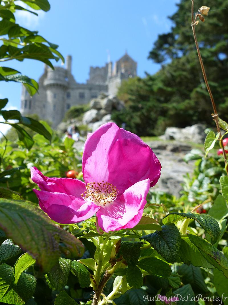 Fleur-jardins-du-chateau
