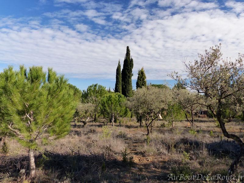 Entre pins et oliviers