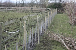 new hedge