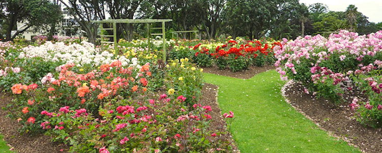 Parnell Rose Gardens for an Auckland Wedding