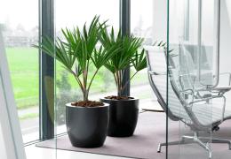 glossaire des plantes d interieur pour bureau univers