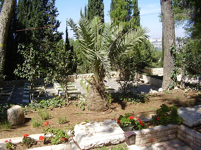Dattelpalme über dem Grab von Avshalom Feinberg.