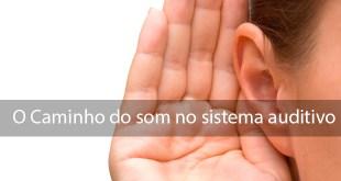 3 coisas que você precisa saber sobre o caminho do som no sistema auditivo 2
