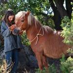 'Mi amigo pony' – estreno en cines 30 de diciembre