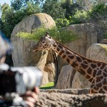 Mediacrest y Discovery inician la producción del docu-reality 'Crónicas del zoo'