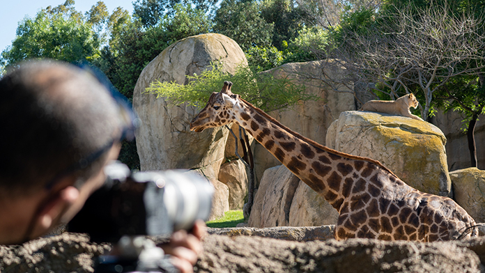 Crónicas del Zoo Mediacrest