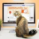 Fundación Affinity elige como Community Manager a un gato