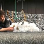 'Isla de perros': los animadores españoles César Díaz y Sergio Lara trabajan mano a mano en la nueva película de Wes Anderson