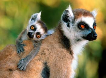 'La isla de los lemures'.