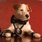 Atresmedia Cine y Four Luck Banana producen la comedia familiar 'Pancho', protagonizada por el famoso perro