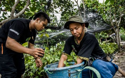 Nature | Restoring natural forests is the best way to remove atmospheric carbon