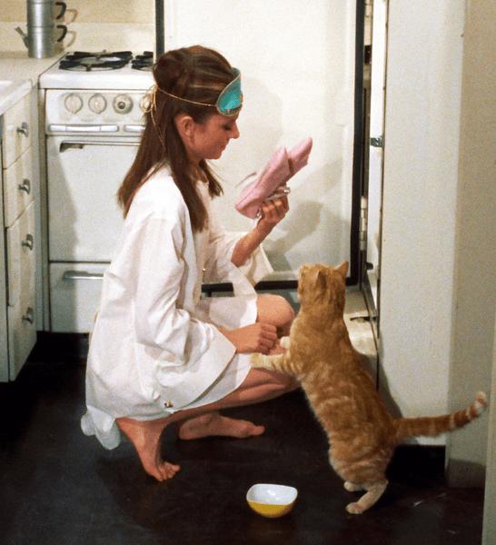 Holly Golightly Cat Breakfast At Tiffany's