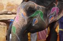 Indien_Jaipur_Elefant