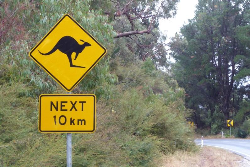 Australien-Tierleben-Kaenguru-Schild