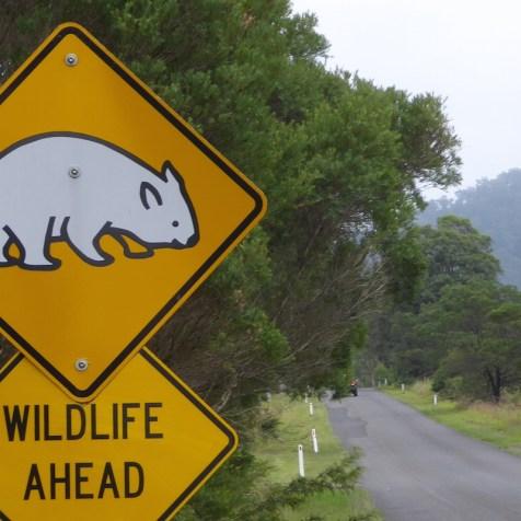 Australien-Tierleben-Wombat-Schild-wildlife