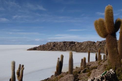 Bolivien Uyuni Insel Kakteen | aufmerksam reisen
