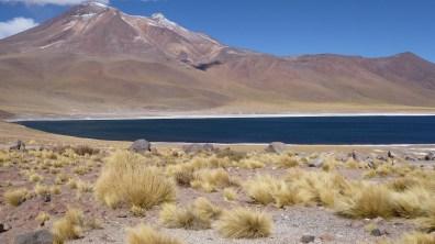 Chile-SanPedroAtacama-LagunaMiscanti