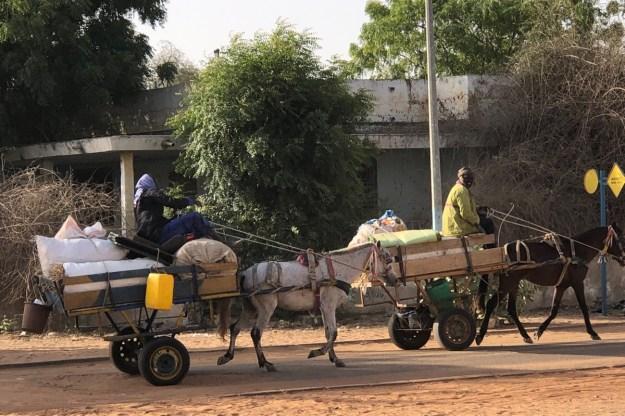 WeltreiseLogbuch-Senegal-Pferdefuhrwerk