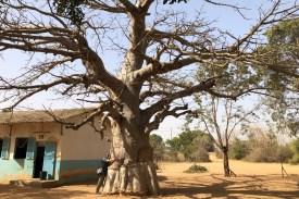 WeltreiseLogbuch-Senegal-Baobab#