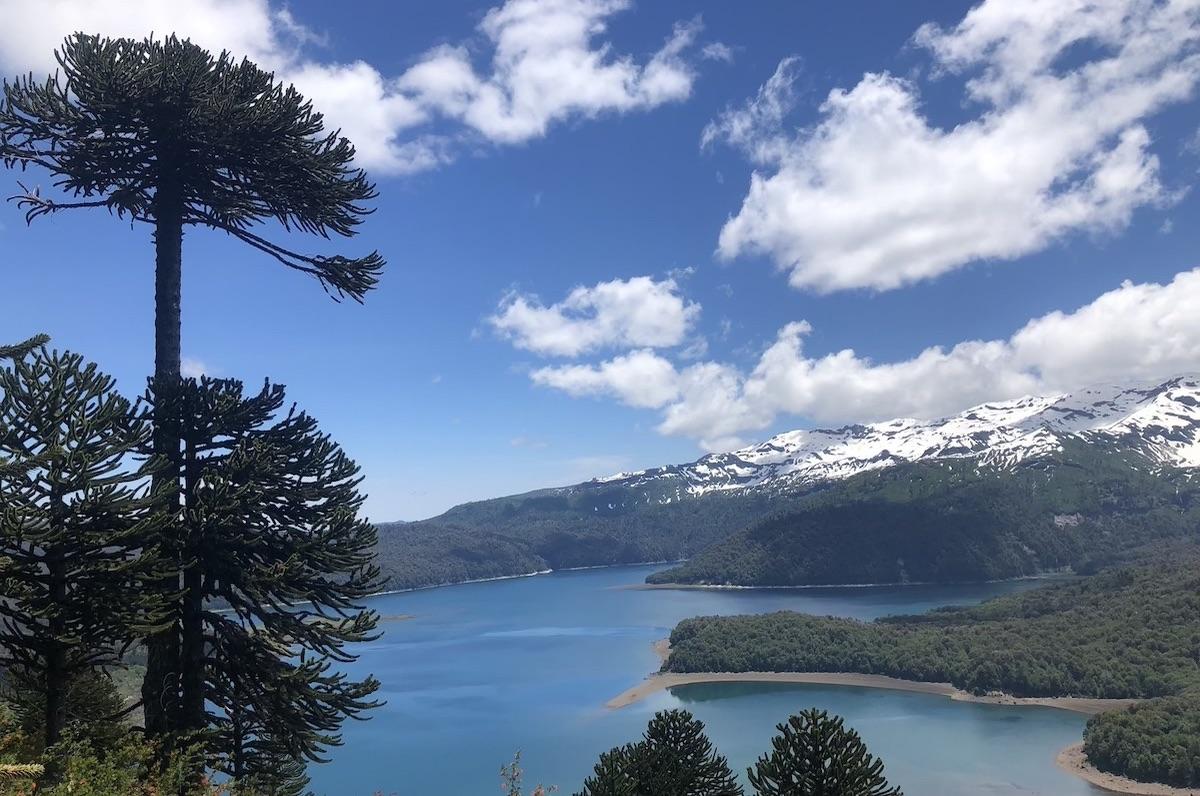 Araukarien-Bäume, See und Vulkan