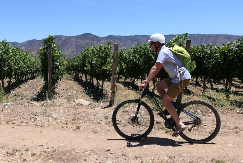 Kleine Radtour mit dem Mountainbike durch die Weinberge