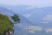 Auf dem Weg zur Alp Sigel