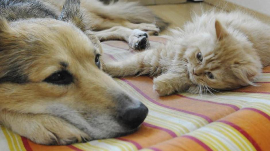 Haustiere So Viel Kosten Hund Und Katze Im Vergleich Geld