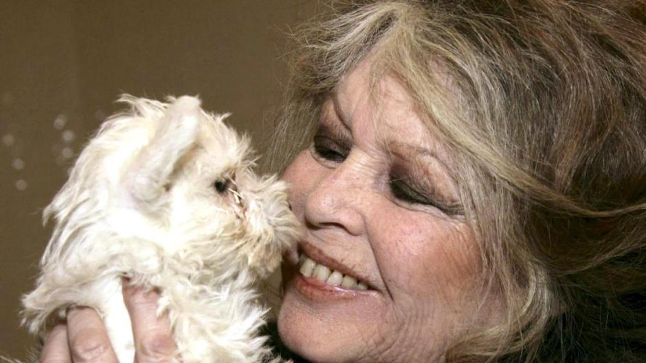 Brigitte Bardot Heute - Sophia Loren Brigitte Bardot Und