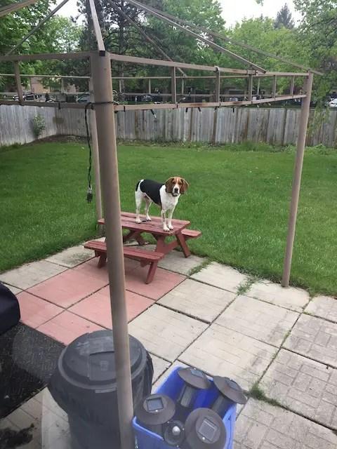 crappy old backyard patio