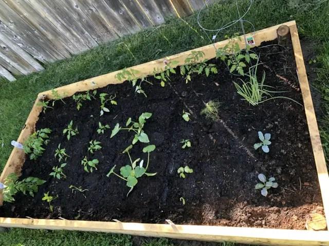 vegetable planter box