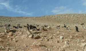 Désert 22 – Les 99 autres dans le désert (Lc 15)