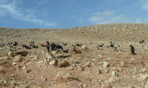 Berger dans le désert de Judée (fb)