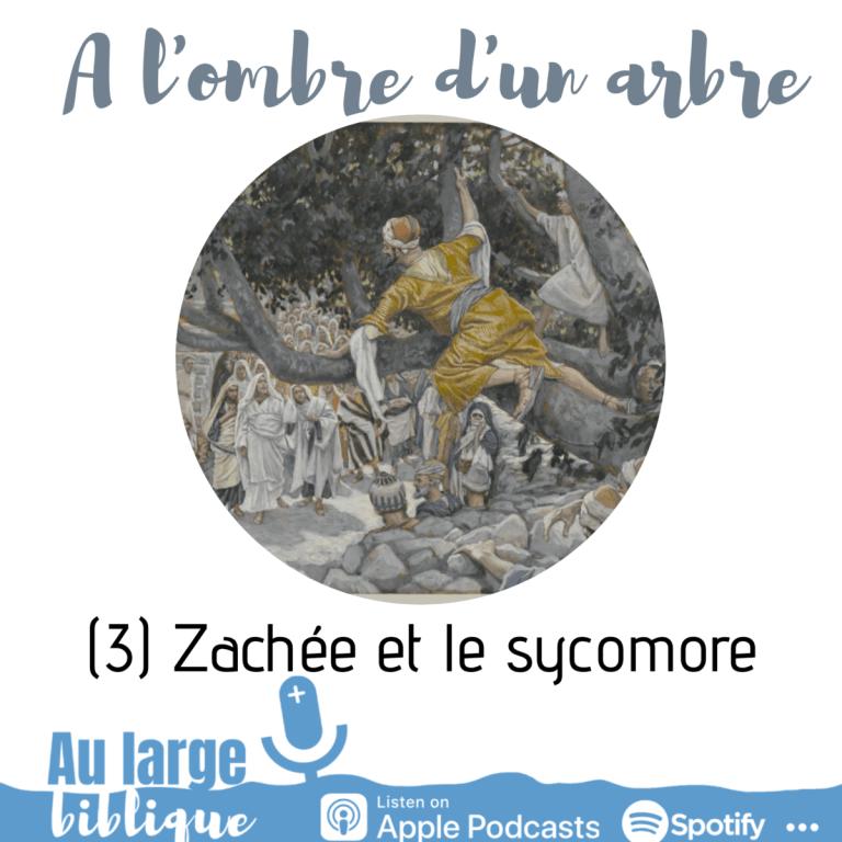 A l'ombre d'un arbre (podcast) Zachée et le sycomore