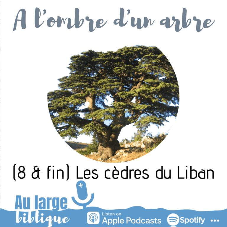 Read more about the article A l'ombre d'un arbre (podcast) Les cèdres du Liban