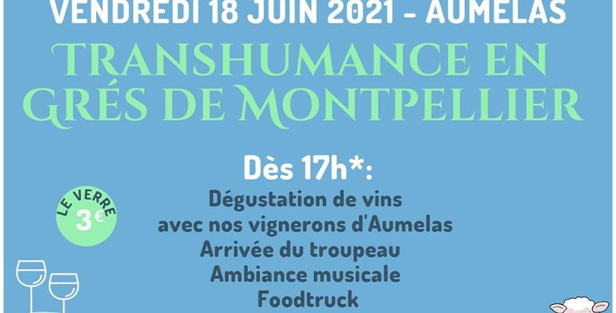 Read more about the article Transhumance en Grès de Montpellier – Vendredi 18 Juin 2021 à Aumelas