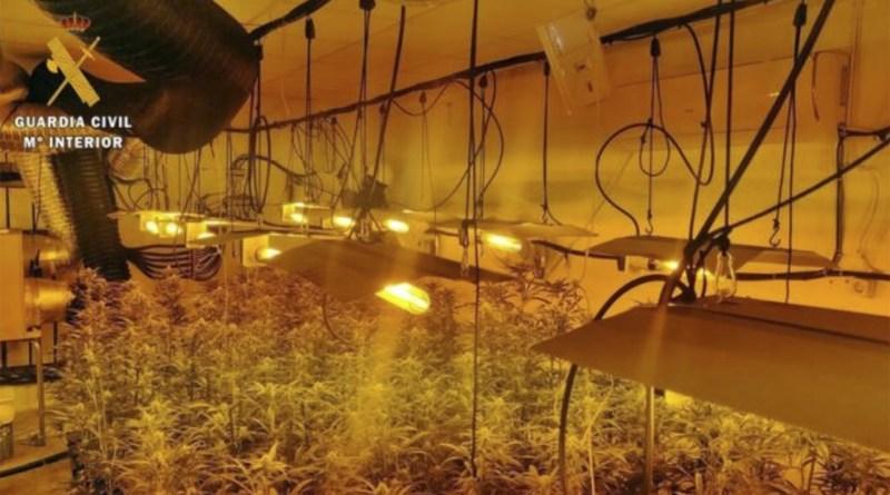 Detenidos por drogas, plantación de marihuana