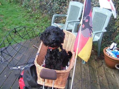 Poppy at 24 weeks in bike basket 1