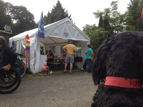 Dogs Eye View of Food Tent