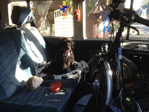 Poppy in bus with bikes