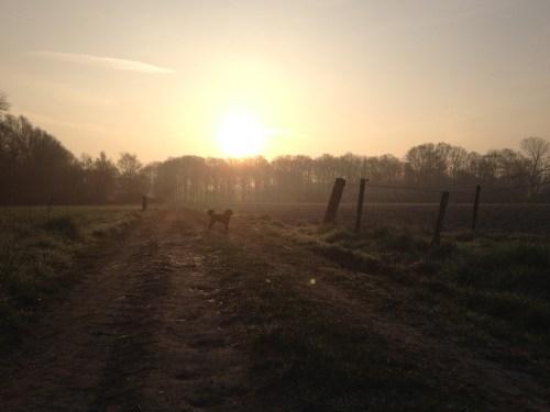 Poppy at sunrise