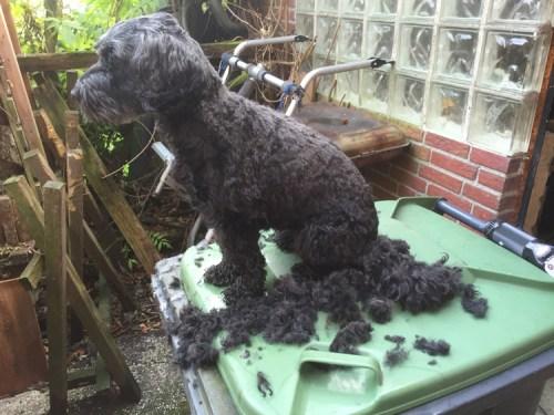 Poppy haircut 1