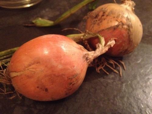 Roadkill onions