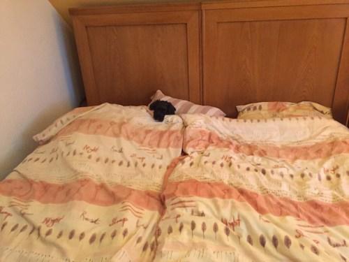 Poppy in bed