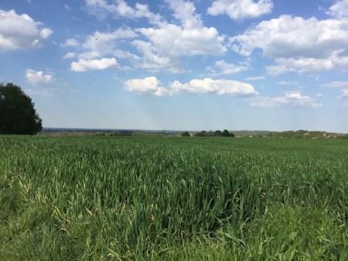 Across fields to Xanten
