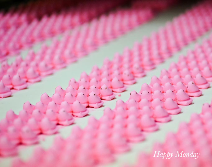 Pink pinks on conveyer belt peeps factory