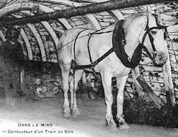 Le Travail du cheval dans la mine au pays des ch'tis