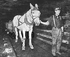 Le cheval dans la mine au pays des ch'tis